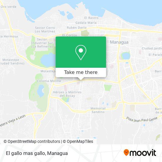 El gallo mas gallo map