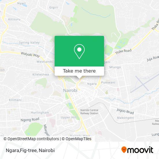Ngara,Fig-tree map