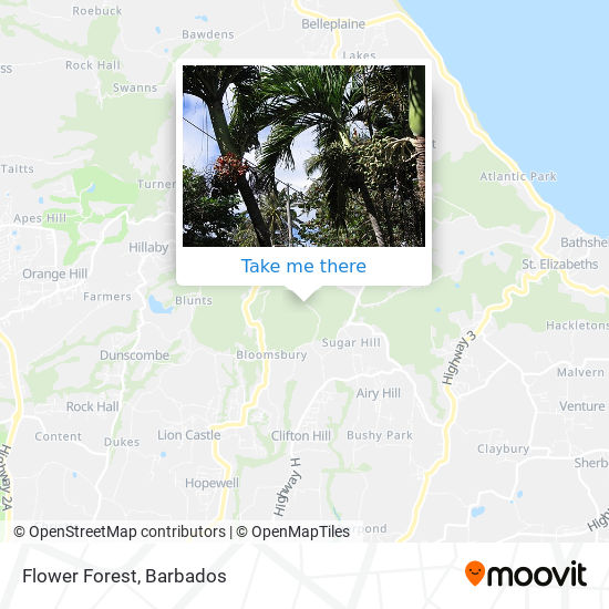 Flower Forest map
